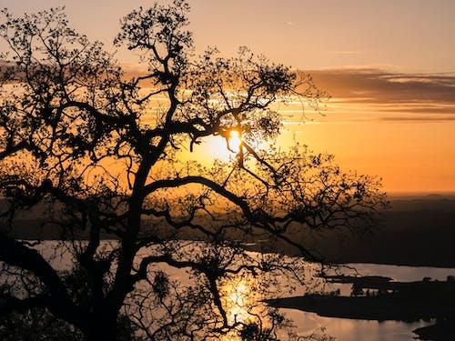 Free stock photo of sun, sunset, tree