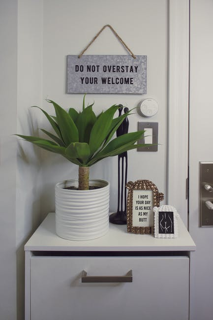 Green Dracaena Plant With White Pot on White Wooden Surface