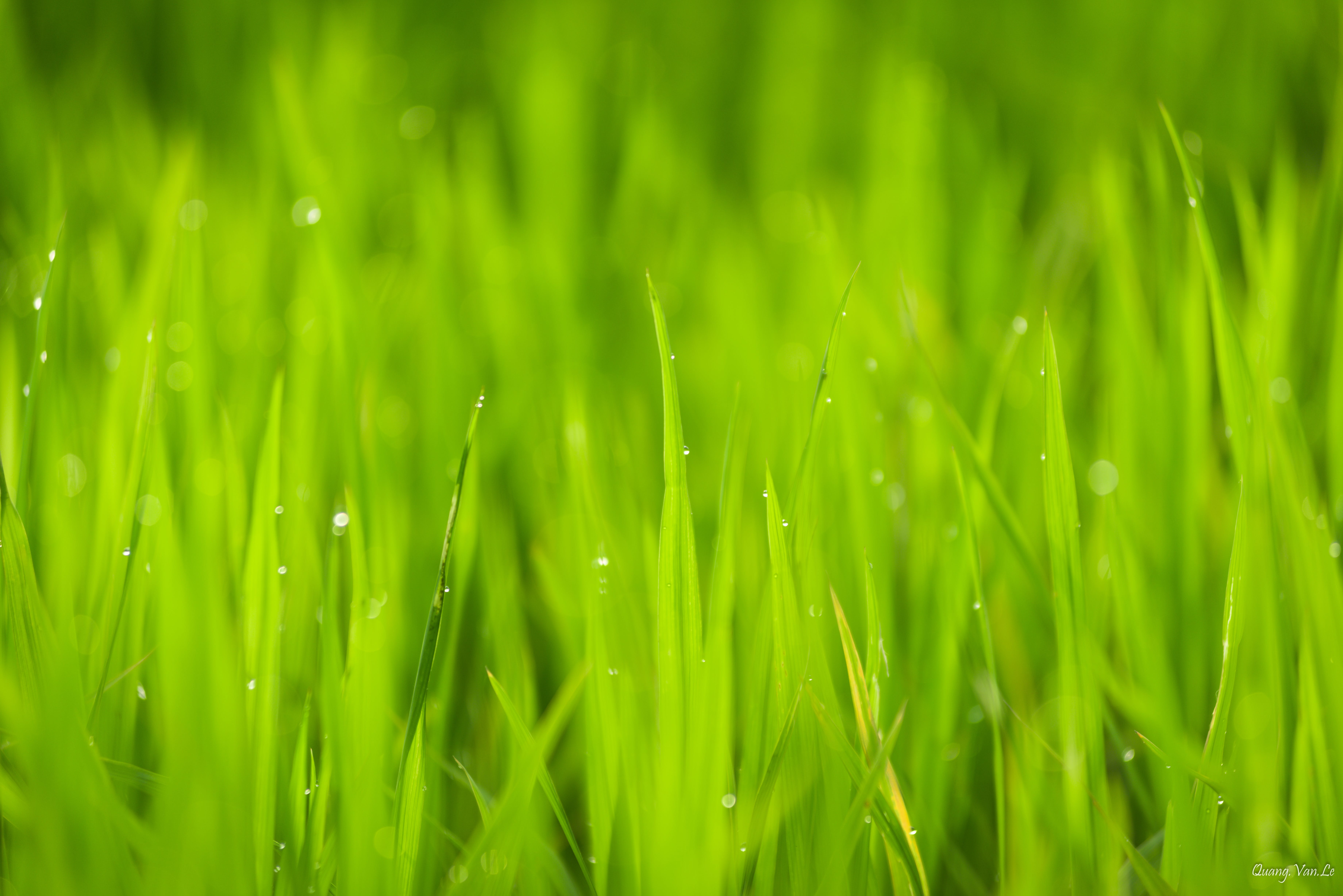 Close Up Photo of Green Grass Under Sunny Sky during Daytime