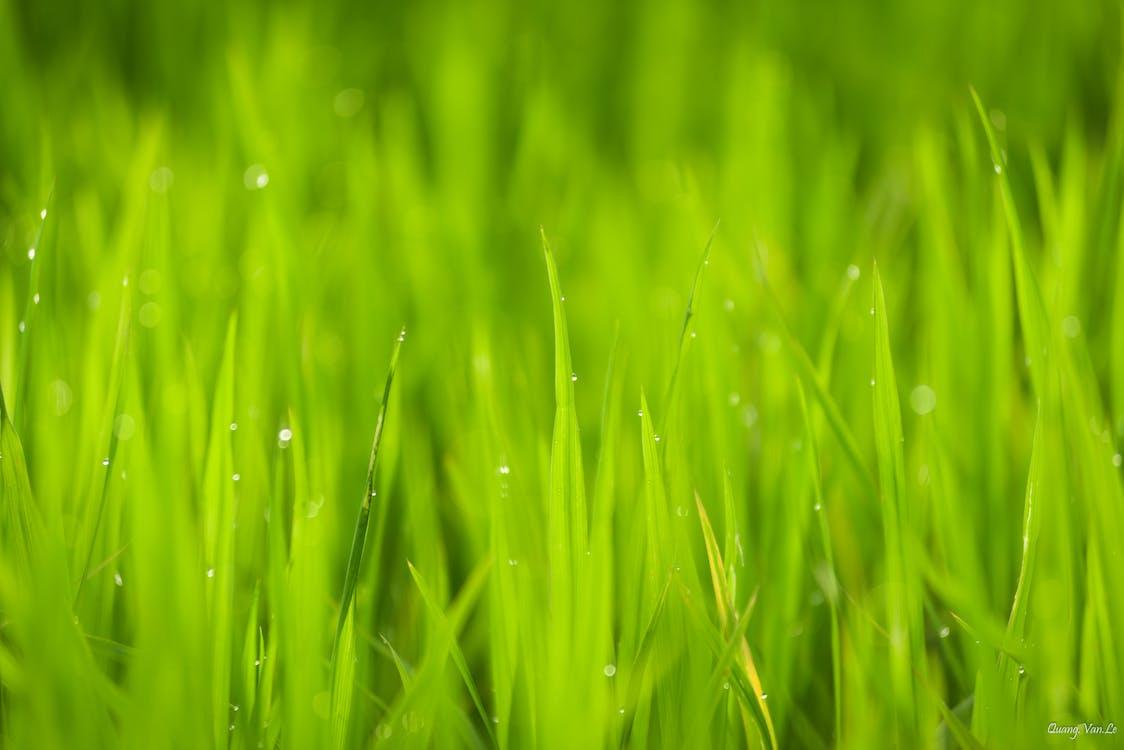 HD tapeta, kvapky dažďa, kvapky rosy