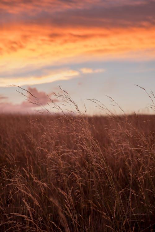 Foto profissional grátis de alvorecer, área, campina, campo de grama