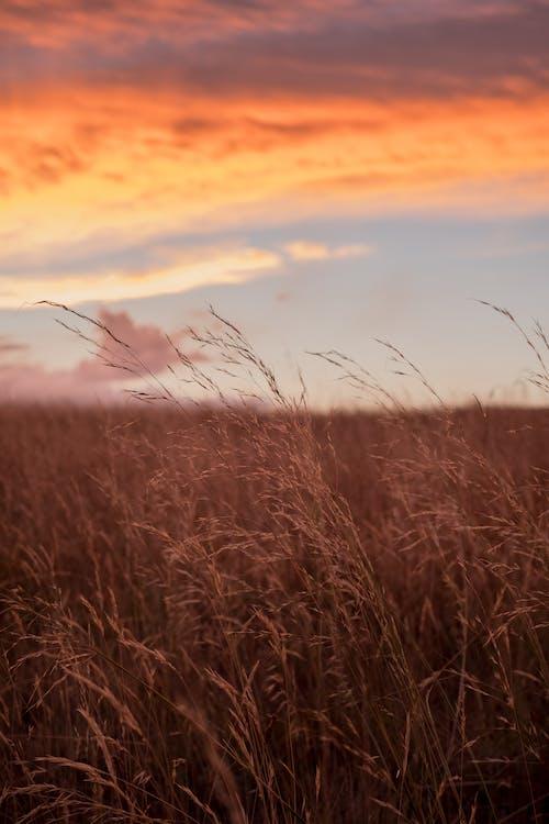 乾草, 吸管, 日出