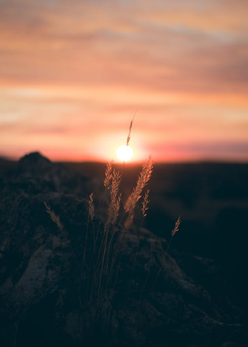 Imagine de stoc gratuită din amurg, apus, backlit