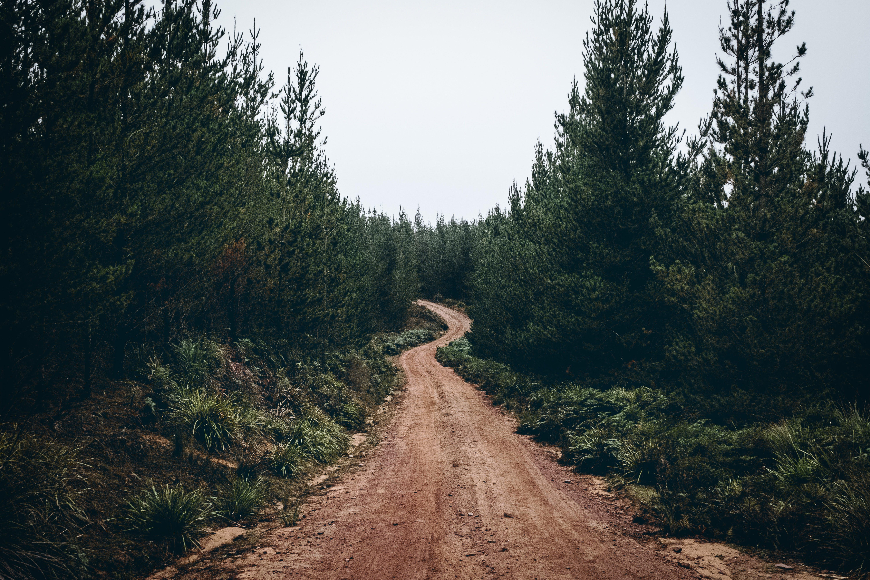 도로, 비포장 도로, 숲, 침엽수의 무료 스톡 사진