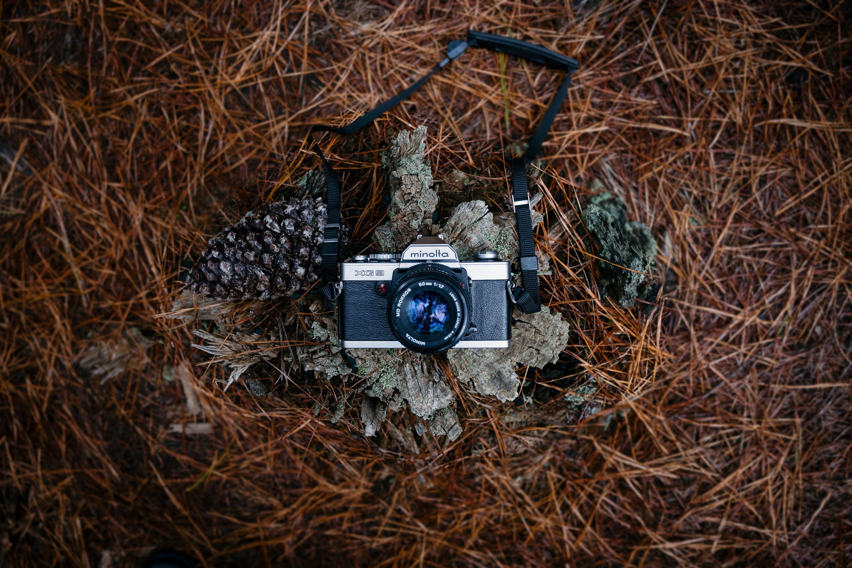 Gratis stockfoto met analoge camera, camera, dennenappel, minolta