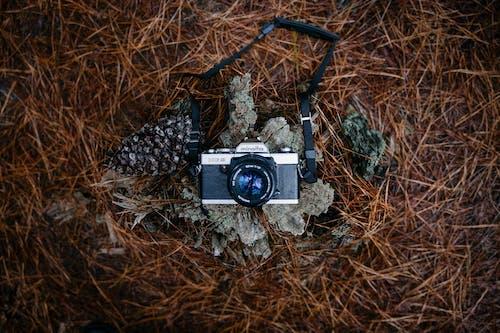 Kostenloses Stock Foto zu analogkamera, felsen, kamera, kieferkegel