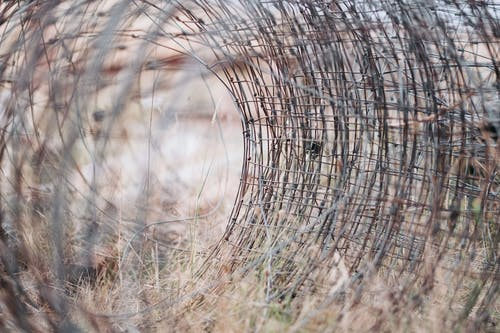 Free stock photo of ar, barb wires, fence, hollow