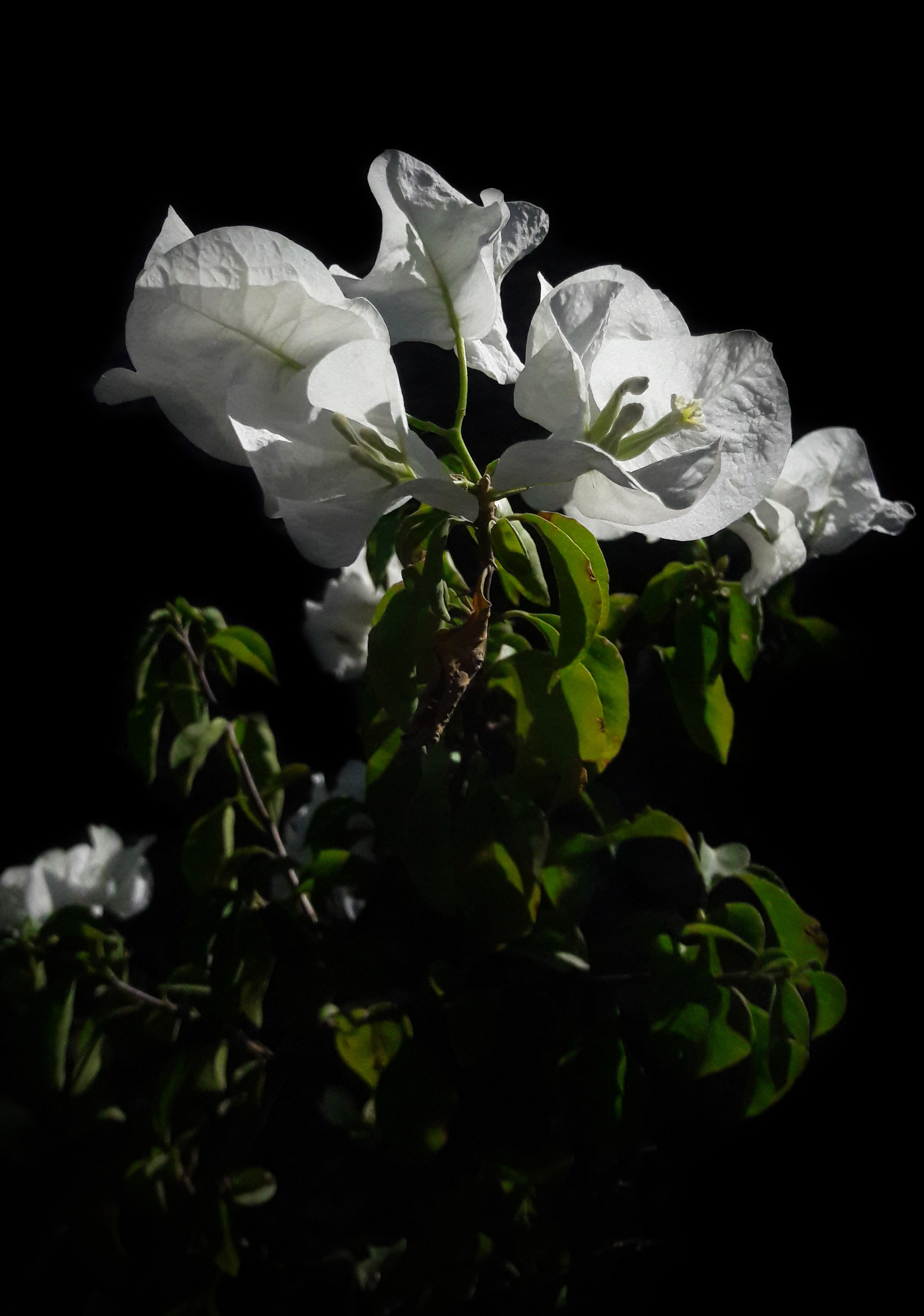 Beautiful Flowers Photography White Pictures Picturesboss