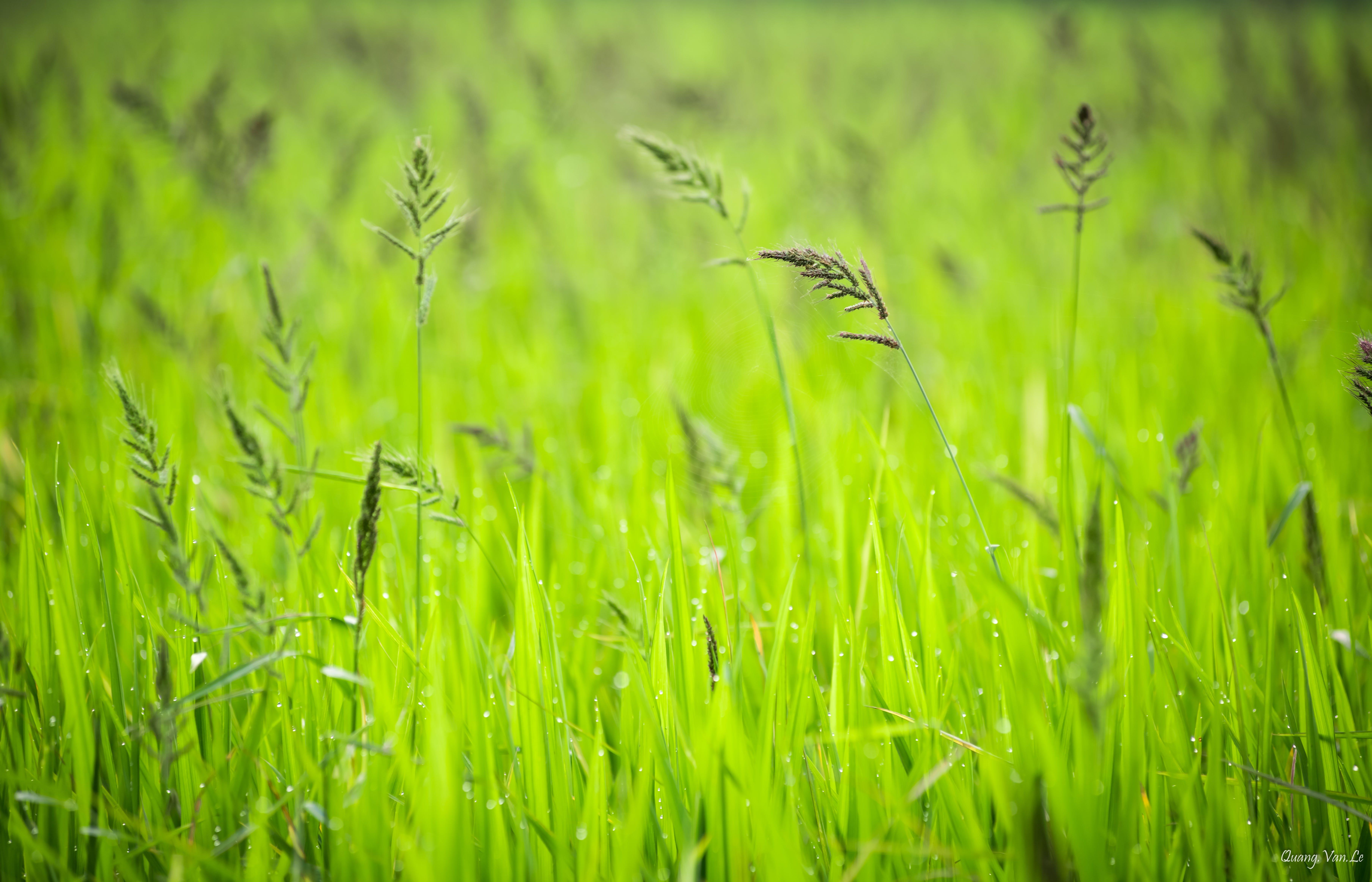 Free stock photo of dewdrops, HD wallpaper, nature, nature wallpaper