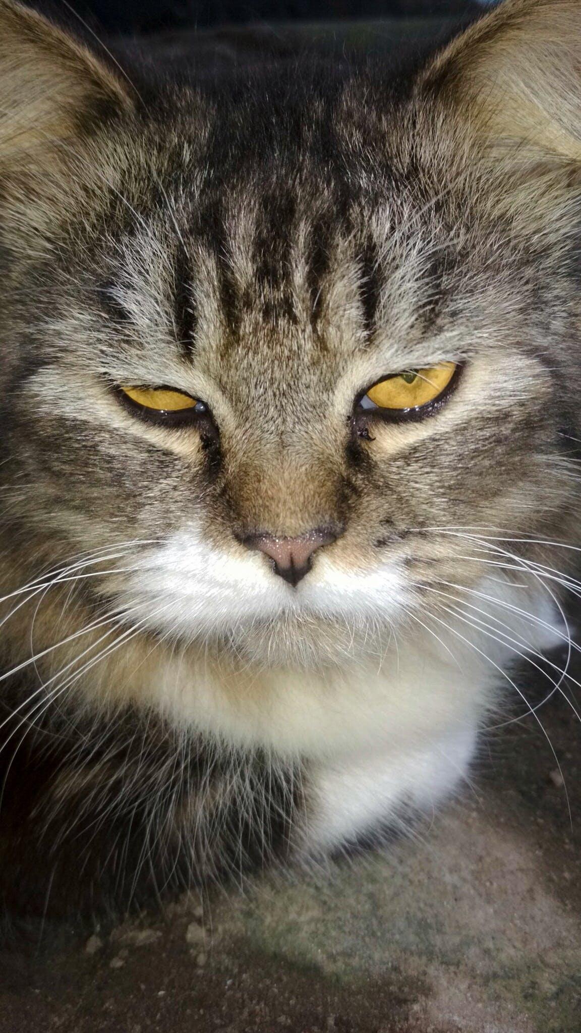 Бесплатное стоковое фото с вспышка, глаз, жестокий, животное