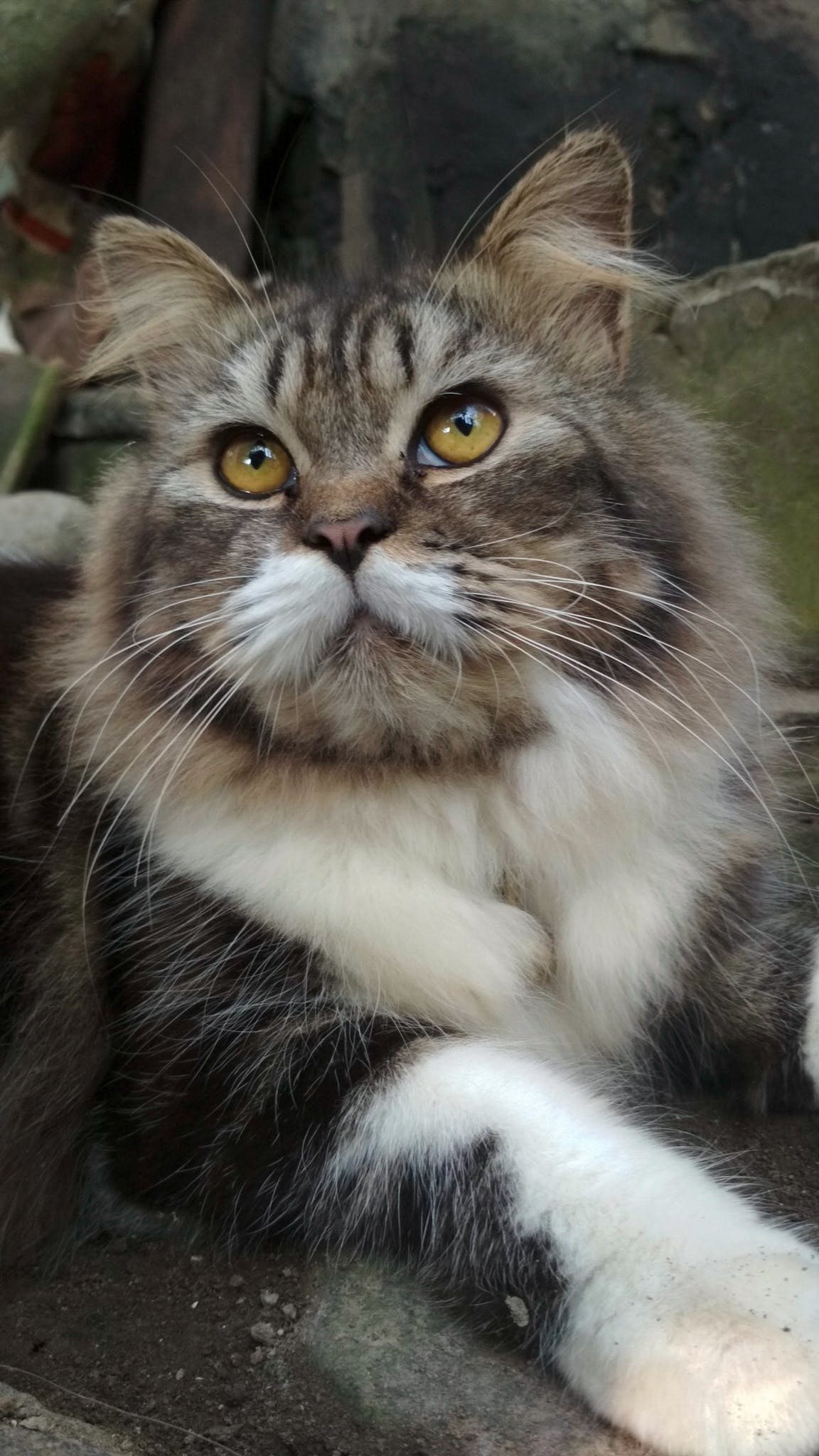 Бесплатное стоковое фото с животное, кошка, кошки, креативный