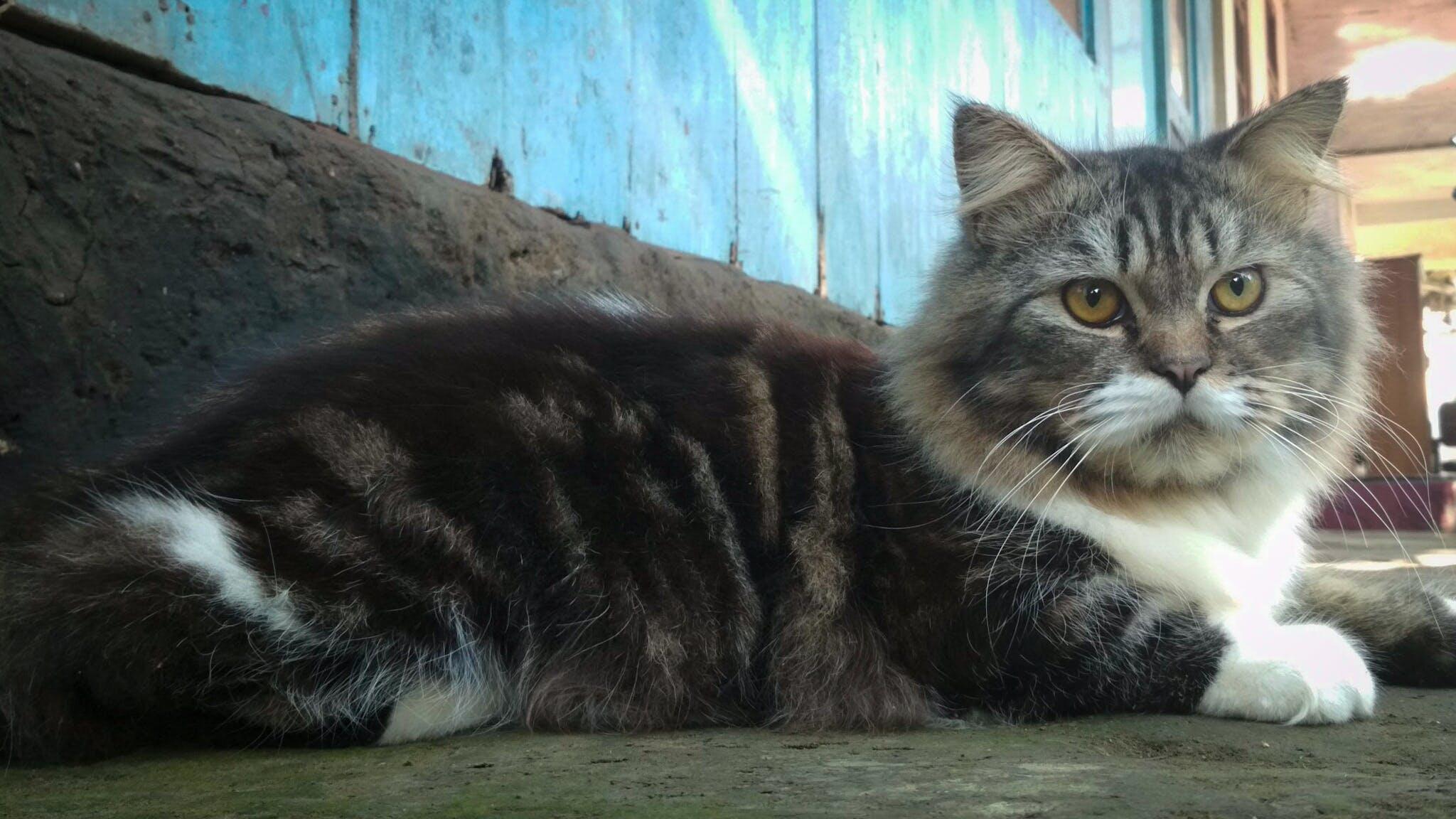Photos gratuites de animal, chat, chats, créatif