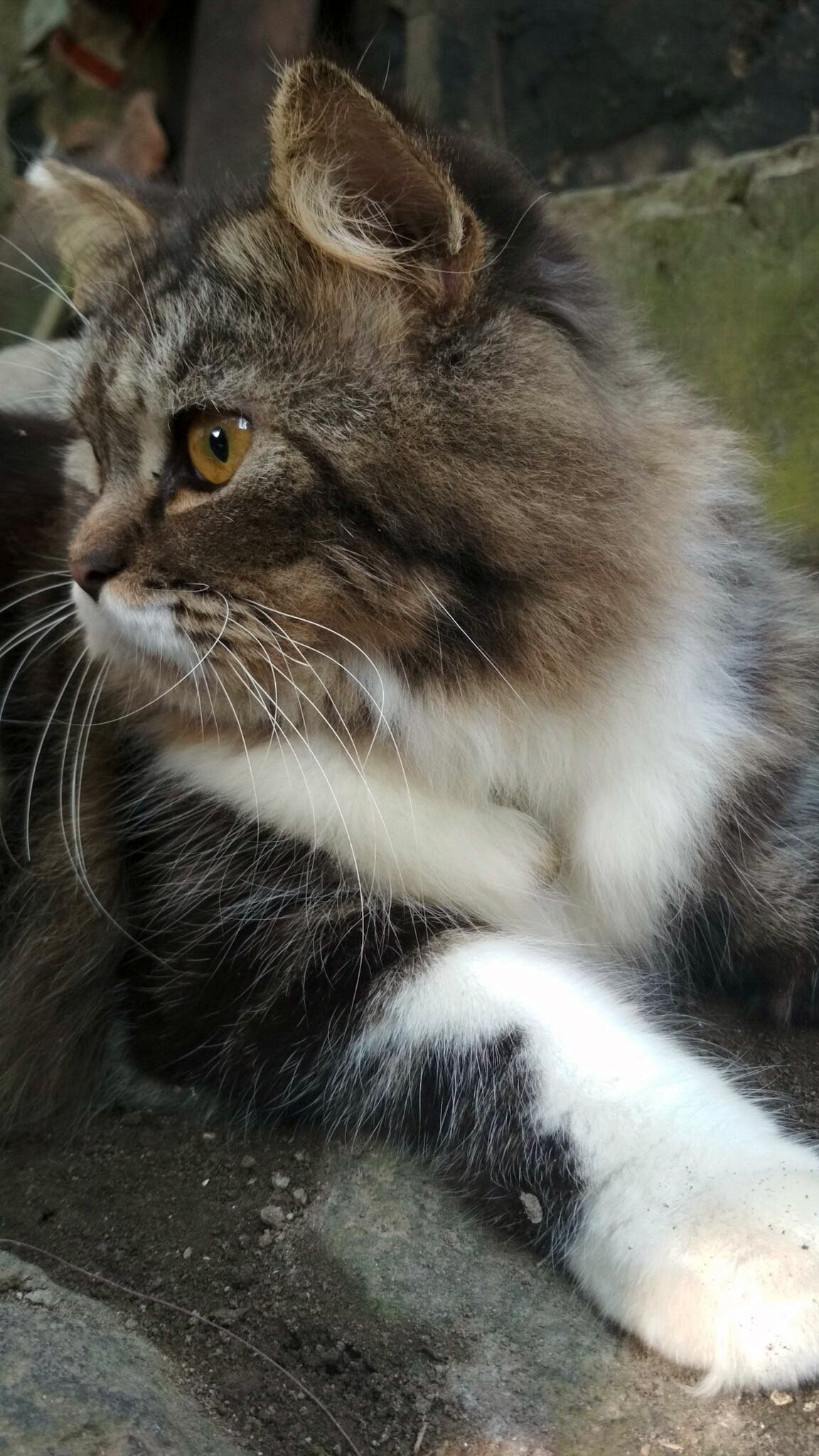 Kostnadsfri bild av djur, elva fotografering, enkel, katt