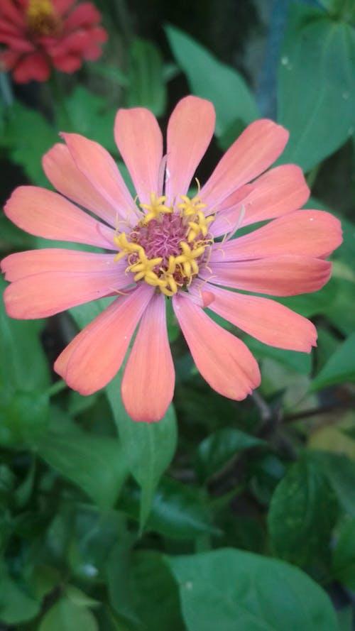 Kostnadsfri bild av blomma, blommor, elva fotografering, grön