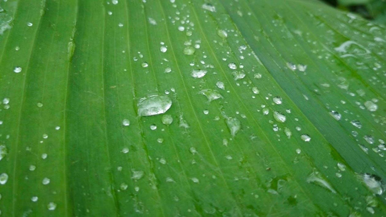 банан, вода, дождь