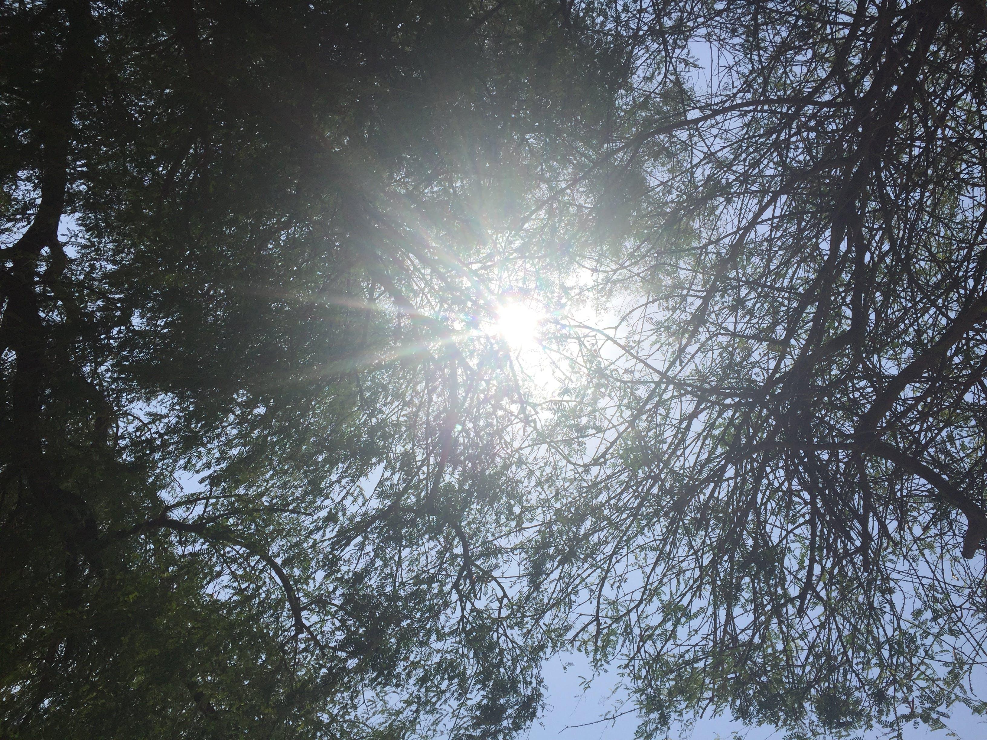 Free stock photo of sun