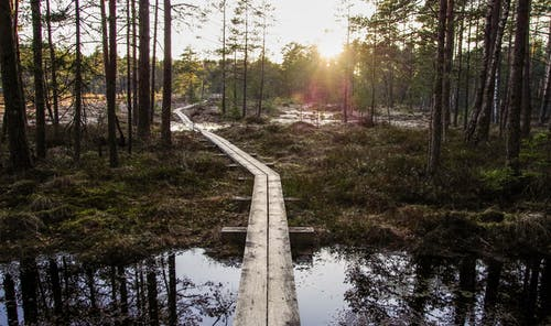 Photo of Boardwalk Between Forest Trees