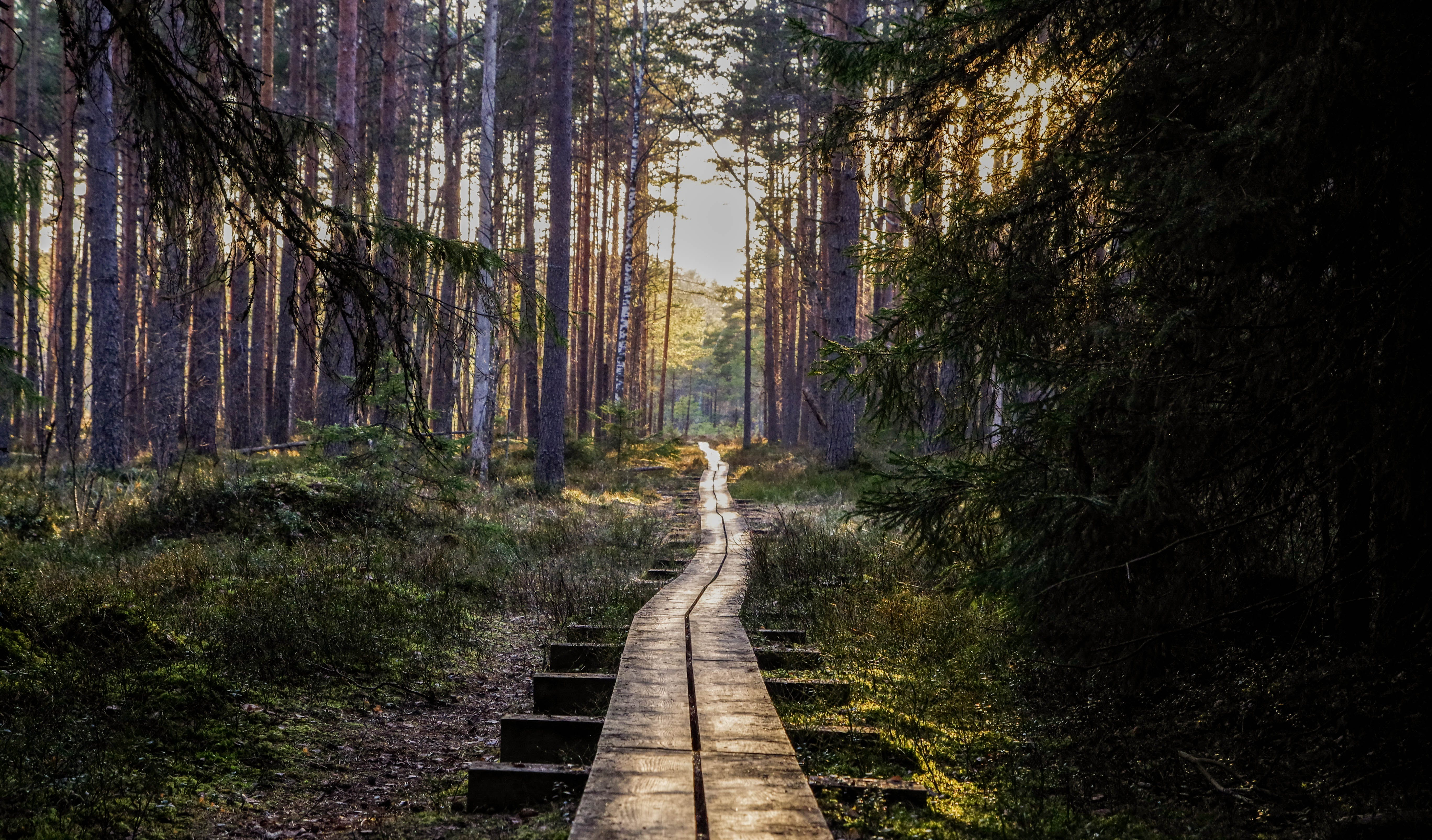 Empty Wooden Pathway in Forest