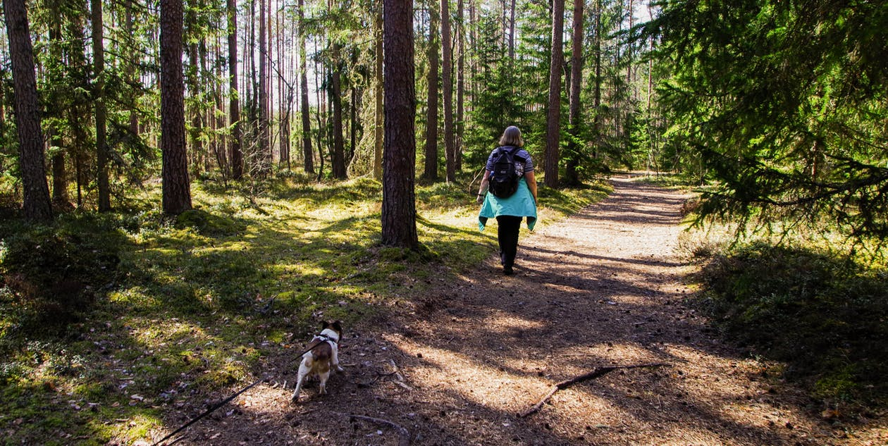 Woman Wearing Black Backpack Walking on the Forest With Her Dog