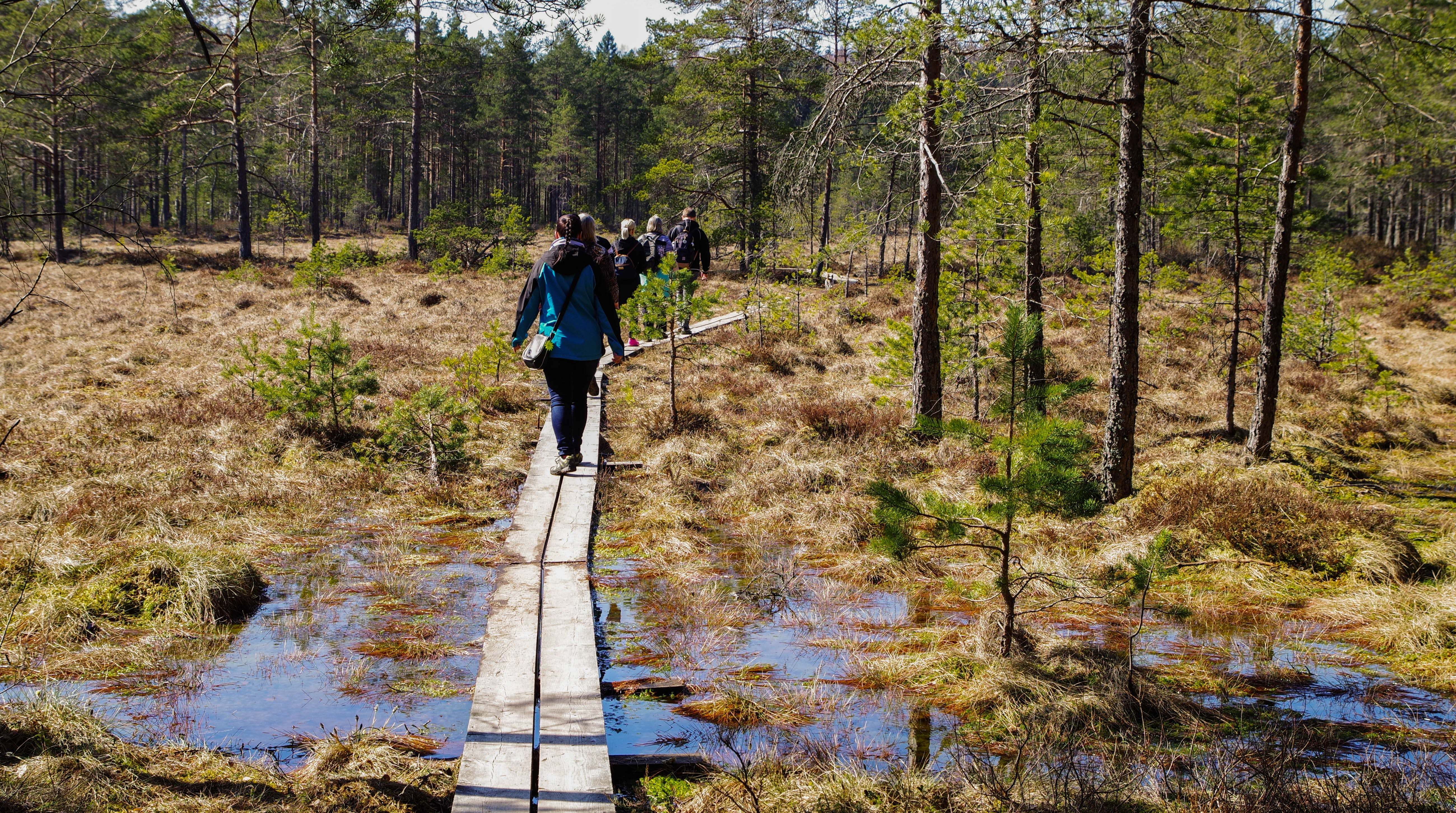People Walking in Brown Wooden Planks in Forest