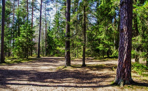 ağaç, ağaç gövdesi, ağaçlar, ahşap içeren Ücretsiz stok fotoğraf