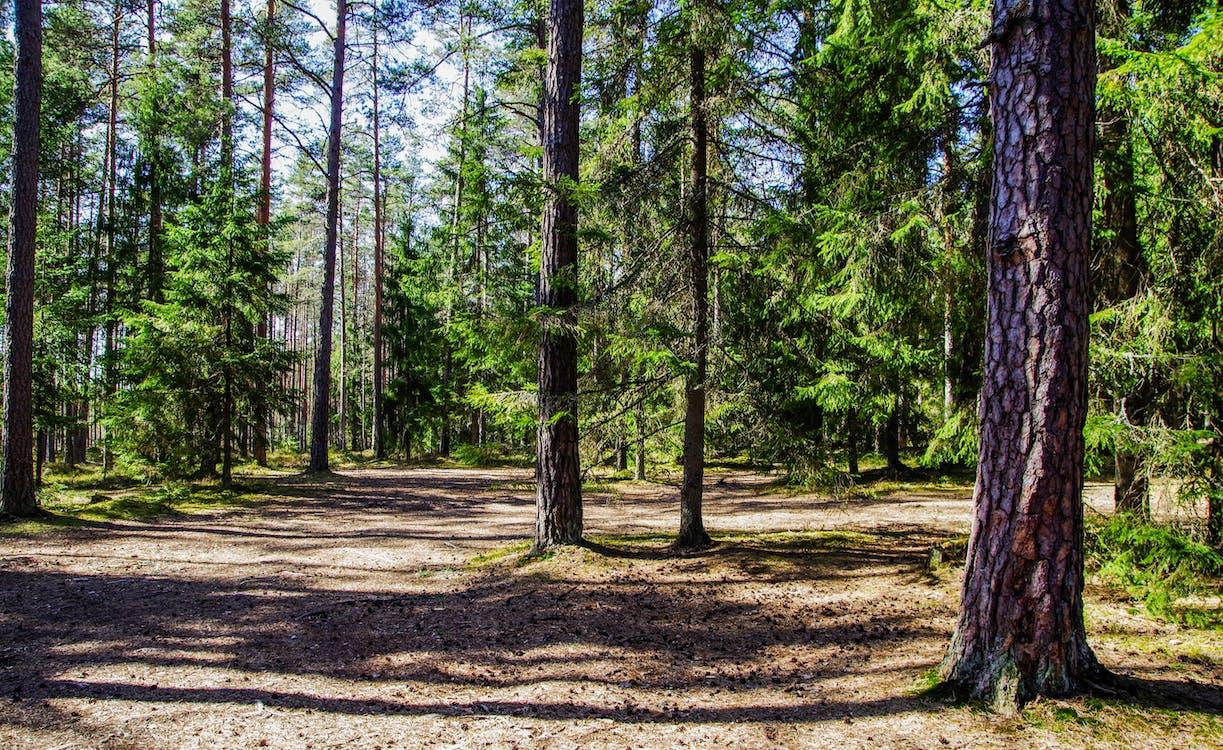 a pagès, arbre, arbres
