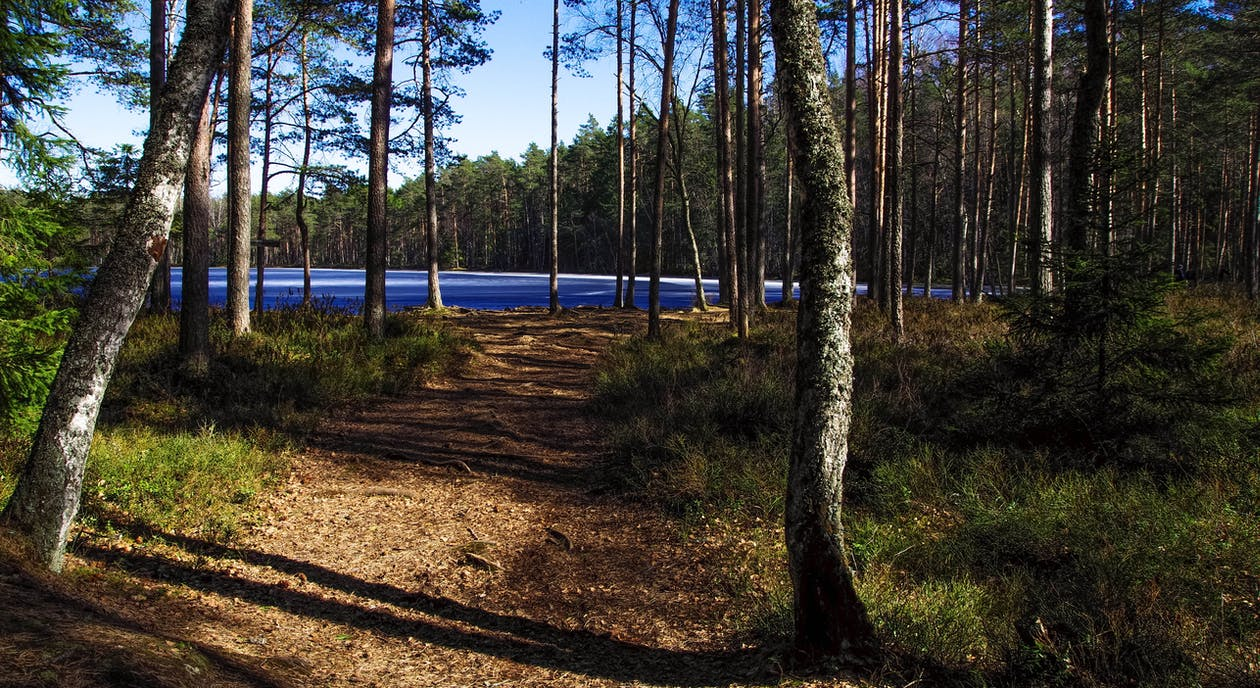Photo of Forest Flooring