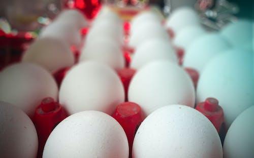 Free stock photo of boiled egg, easter egg, easter eggs, egg