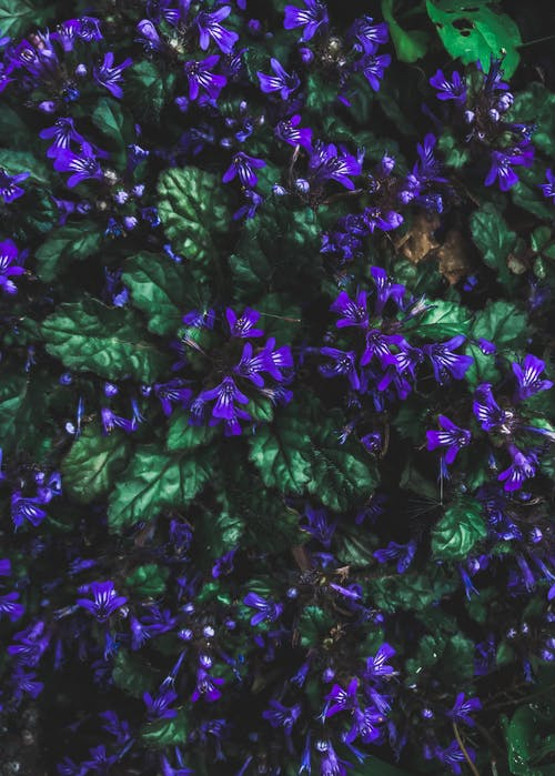 가벼운, 계절, 꽃과 나뭇잎, 꽃이 피는의 무료 스톡 사진