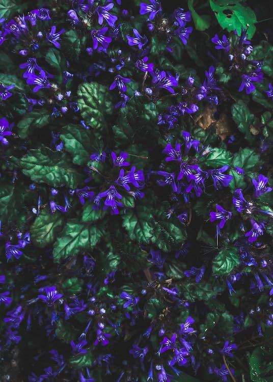 blomma, blommor och löv, blomning