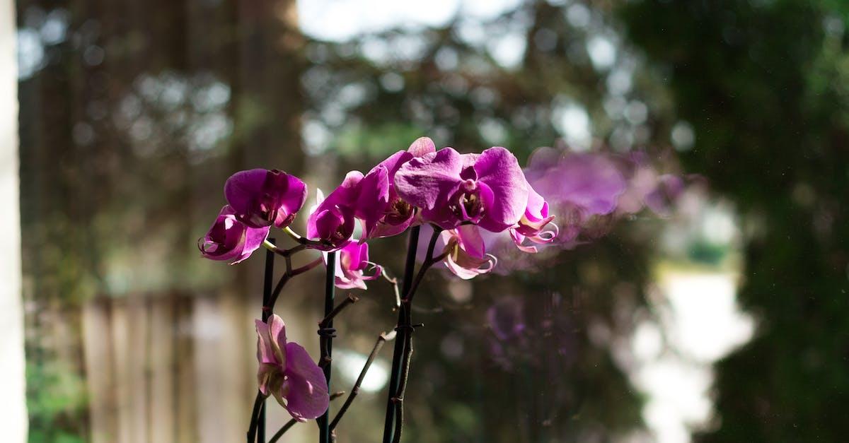 Красная орхидея в природе фото