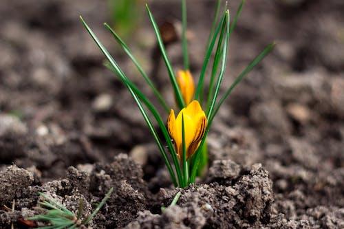 Free stock photo of beatiful, flower, garden, ground