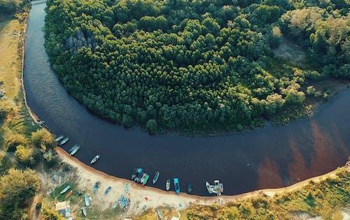 Foto profissional grátis de água, árvores, barcos, beira-rio