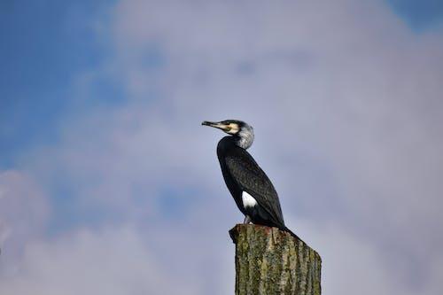 Foto profissional grátis de animais selvagens, animal, ao ar livre, ave