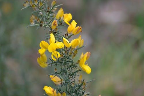 Darmowe zdjęcie z galerii z arbuste, botanique, fleurs, flore