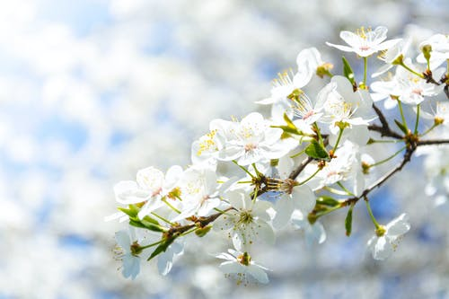 Photos gratuites de blanc, branches, brillant, brouiller