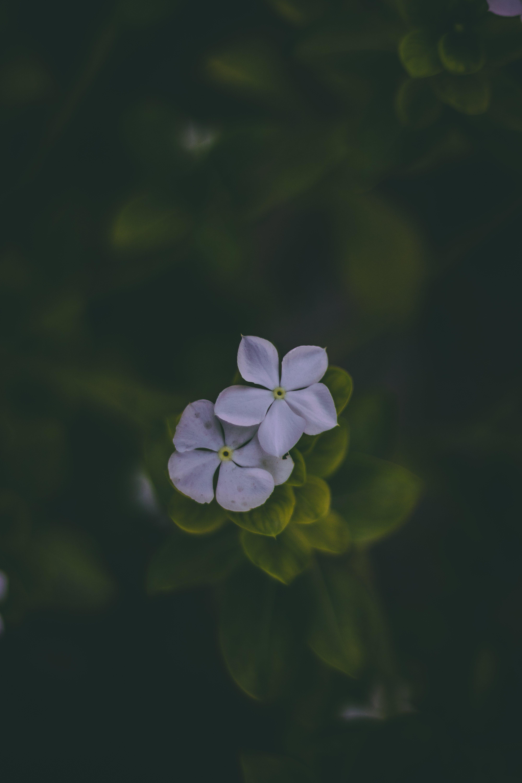Gratis lagerfoto af blomst, blomstrende, delikat, farve