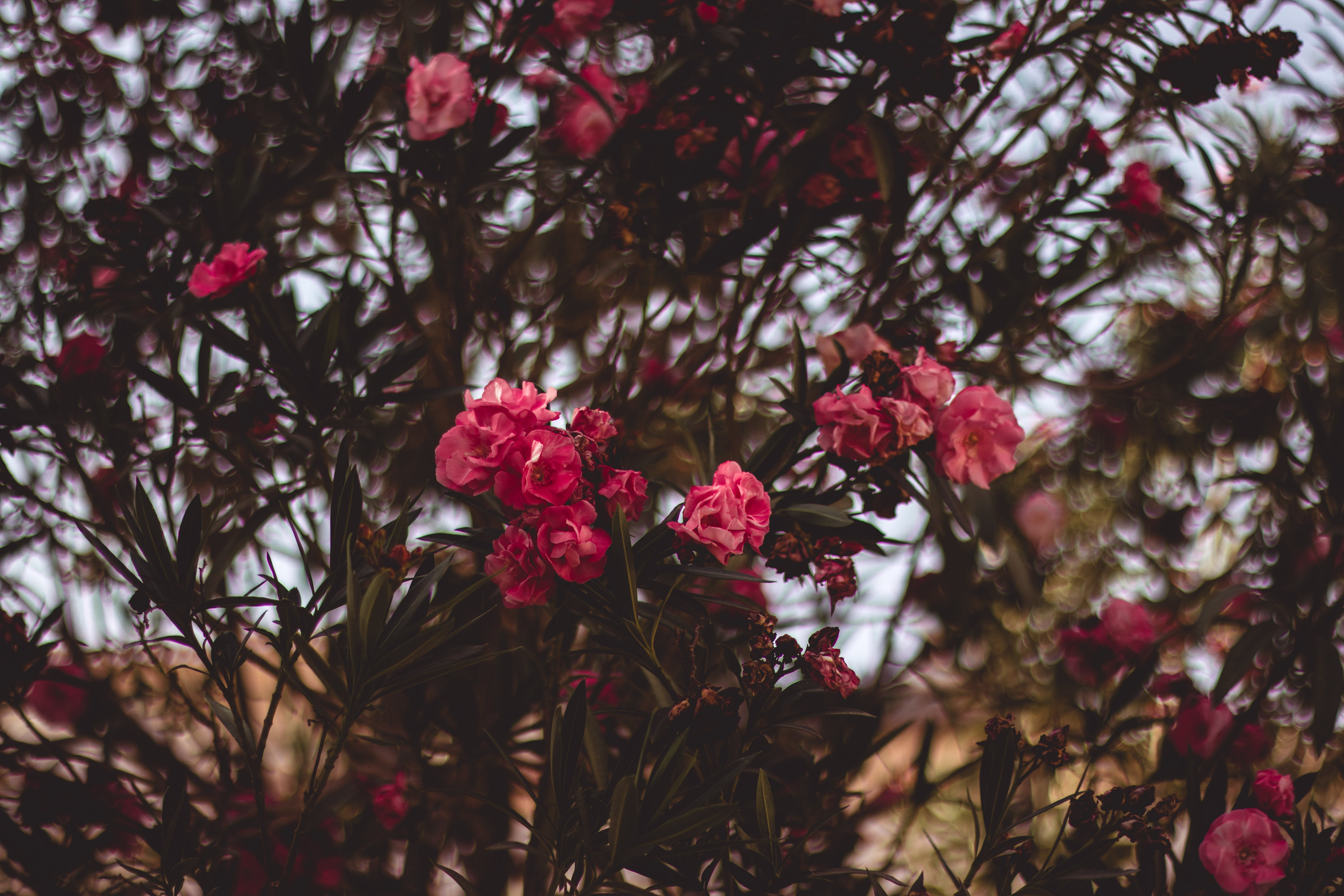 Red Clustered Flowers