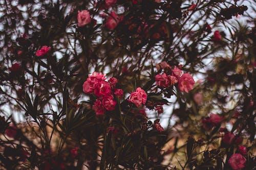 Základová fotografie zdarma na téma barva, flóra, keřík, krásný