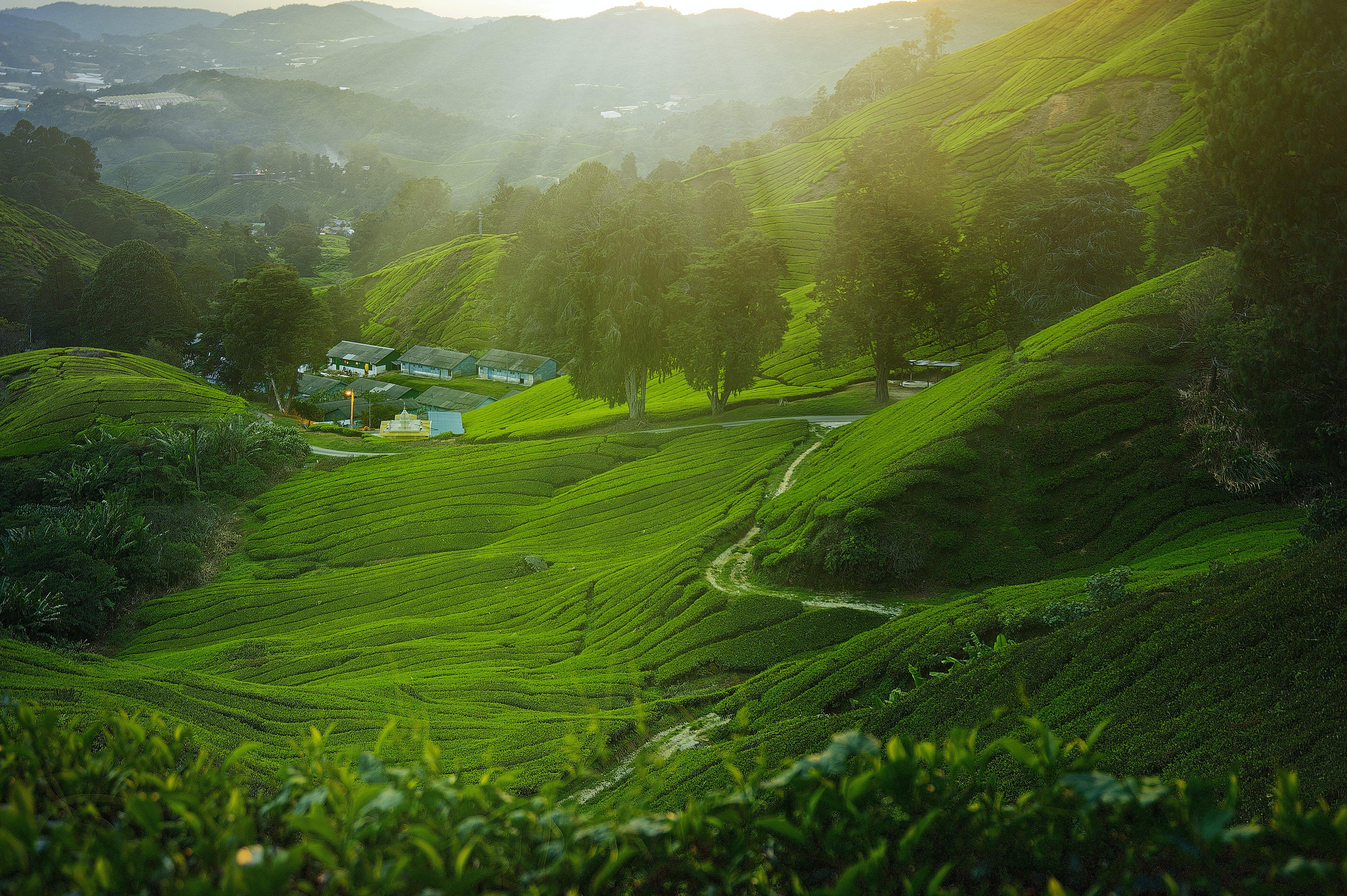 Fotos de stock gratuitas de amanecer, árbol, campo, campo de heno