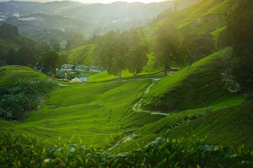 녹색 잔디 잔디