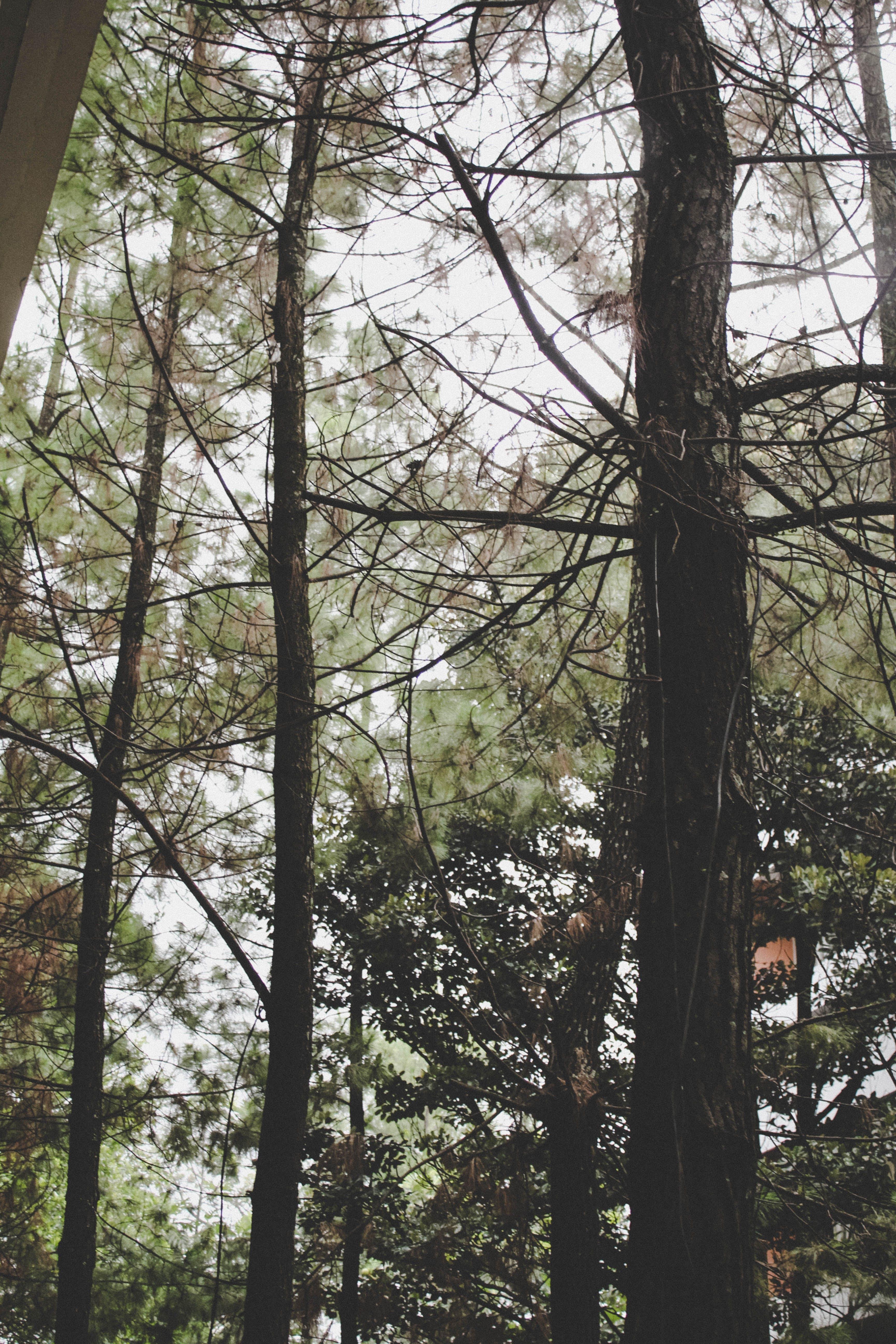 Closeup Photo of Green Trees
