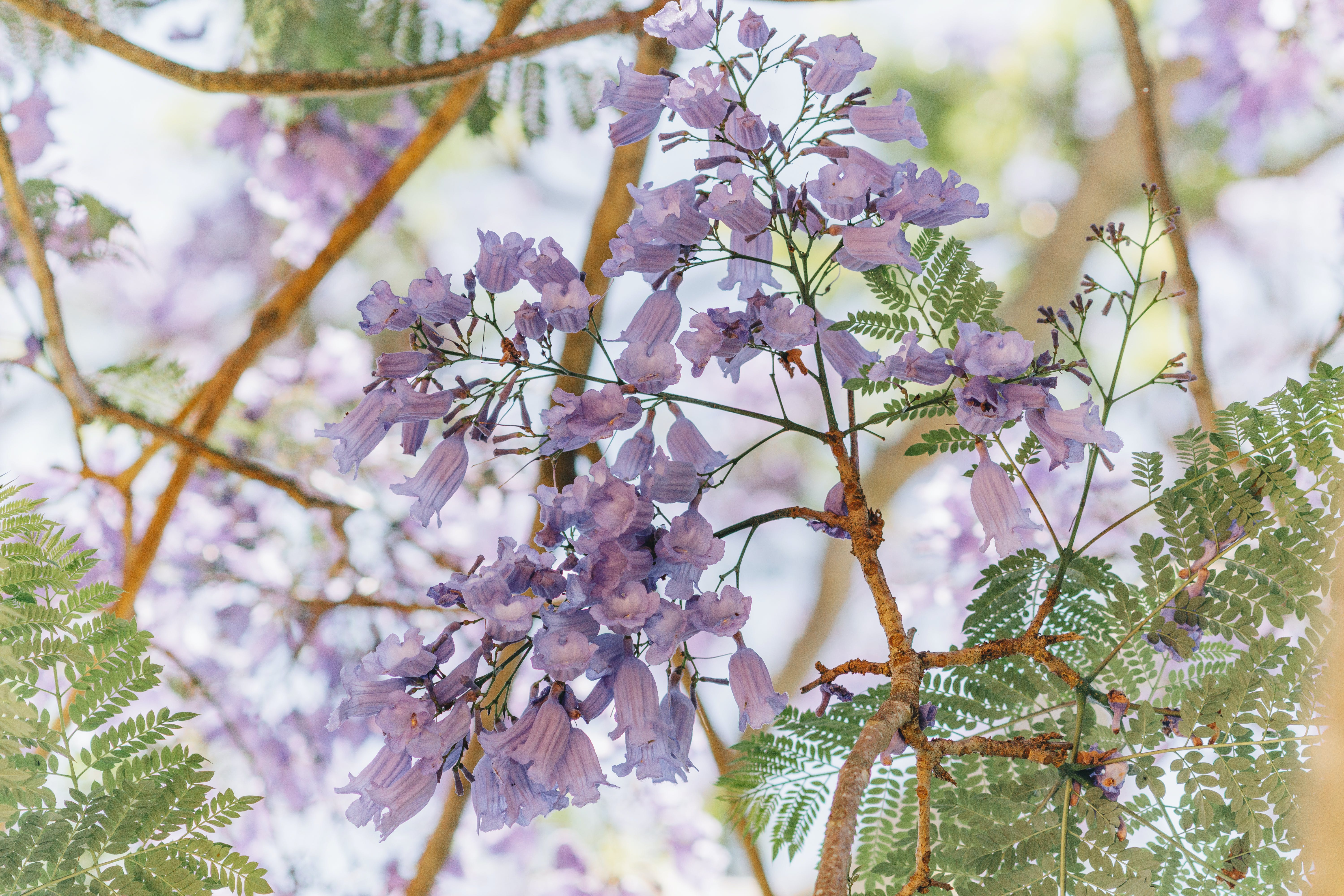 Selective Focus Photography of Purple Clustered Flowers