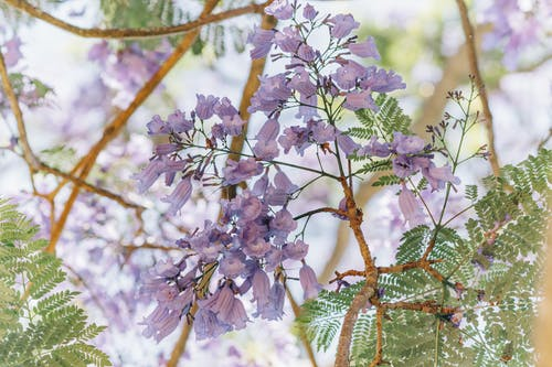Imagine de stoc gratuită din anotimp, arbust, botanic, creangă