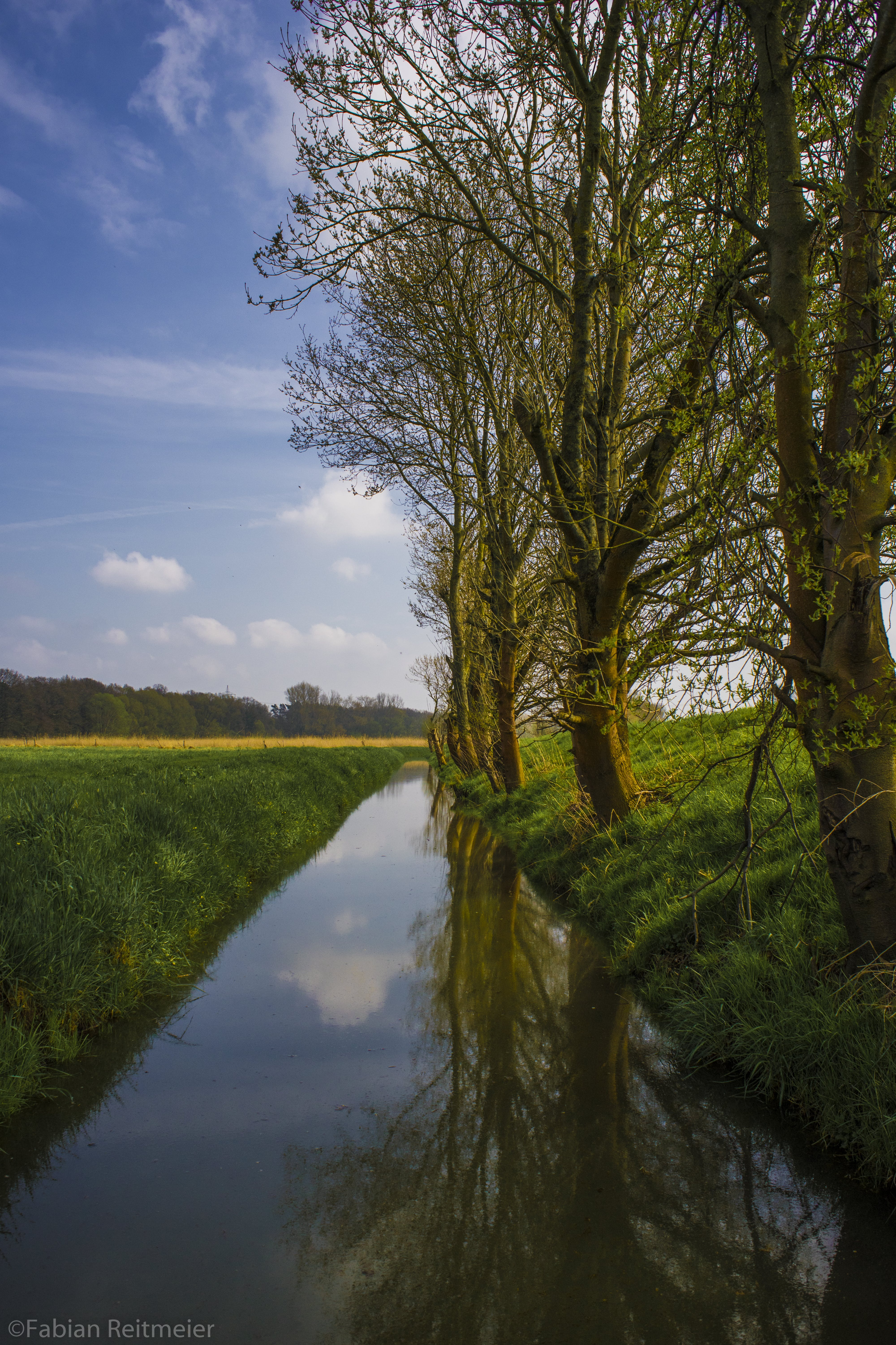 Free stock photo of blue sky, brook, ditch, flower buds