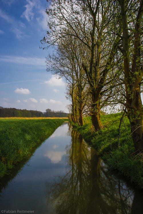 Základová fotografie zdarma na téma květní pupeny, modrá obloha, příkop, příroda