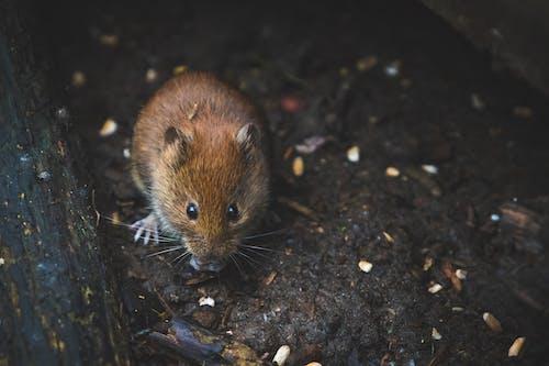 나무, 동물 사진, 마우스, 작은의 무료 스톡 사진
