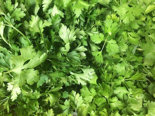 Безкоштовне стокове фото на тему «їжа, ароматичний, зелений, овоч»