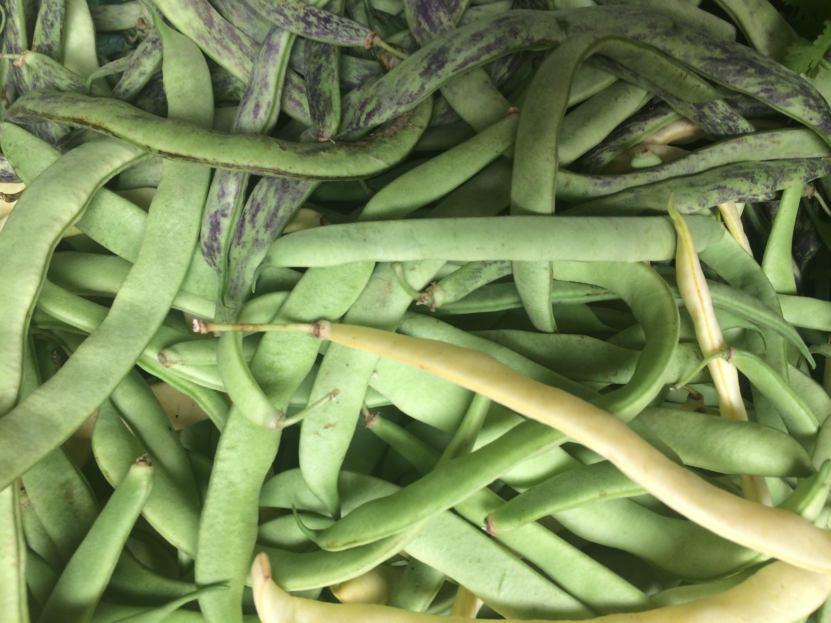 Free stock photo of bean, fresh vegetable, green, green bean