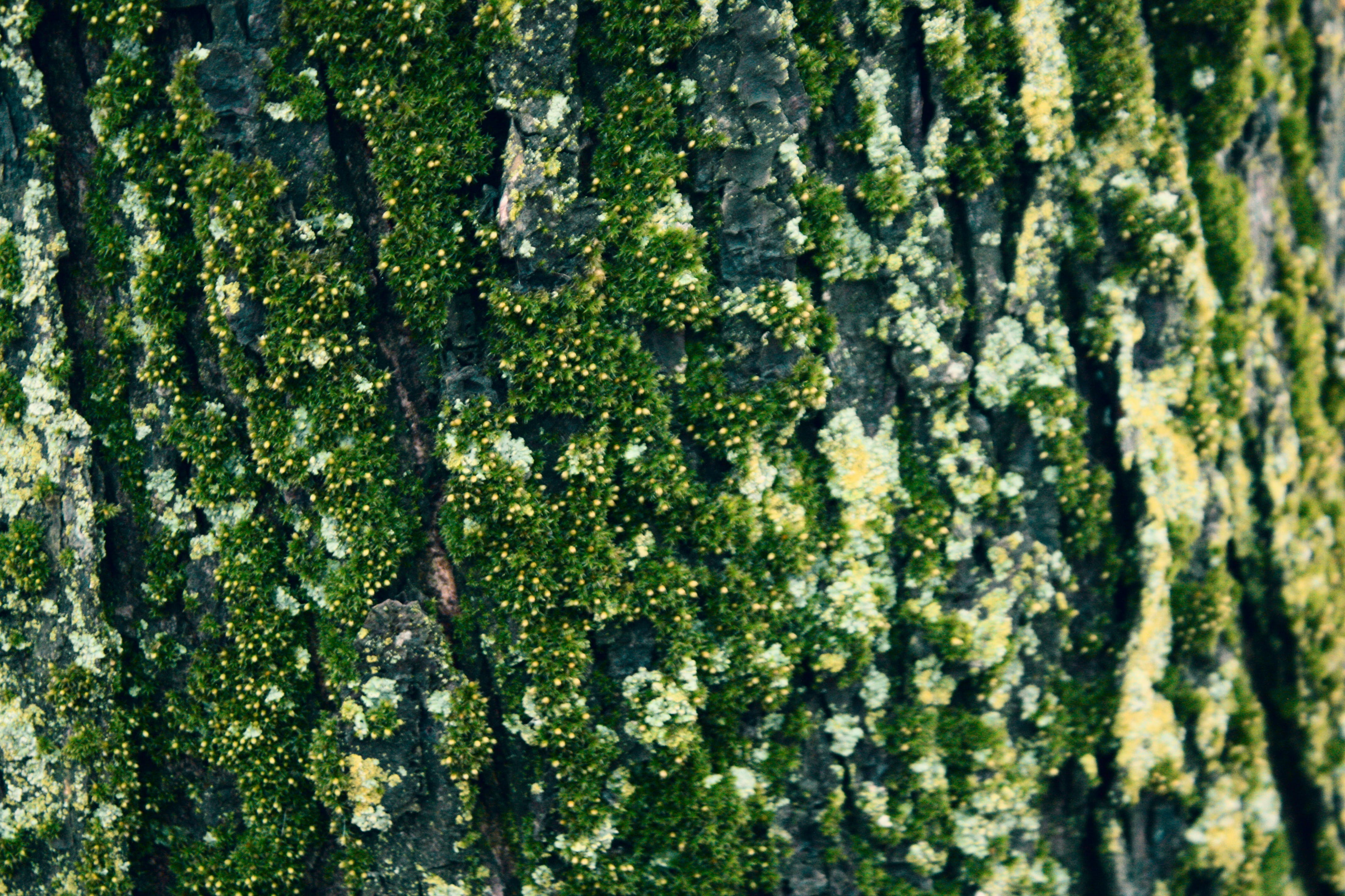 Free stock photo of bark, camping, green, moss